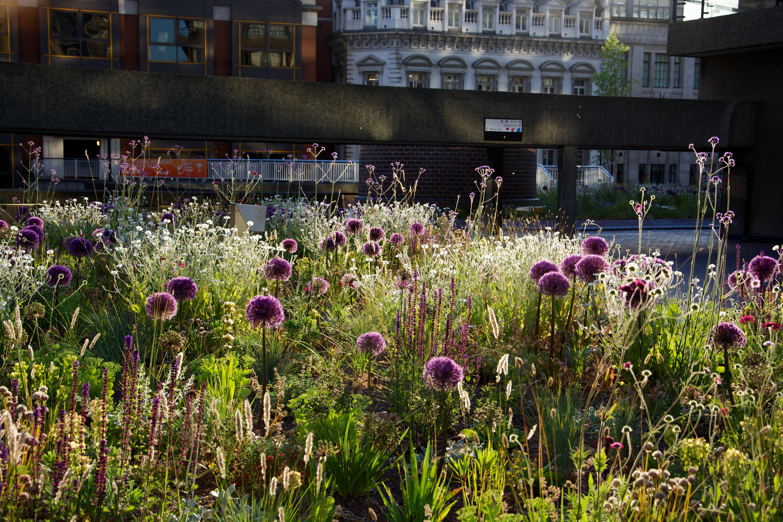 Planting Design As An Art Form Sheffield Landscape Blog