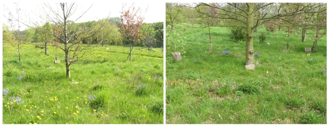 blue bells 2009 and 2015