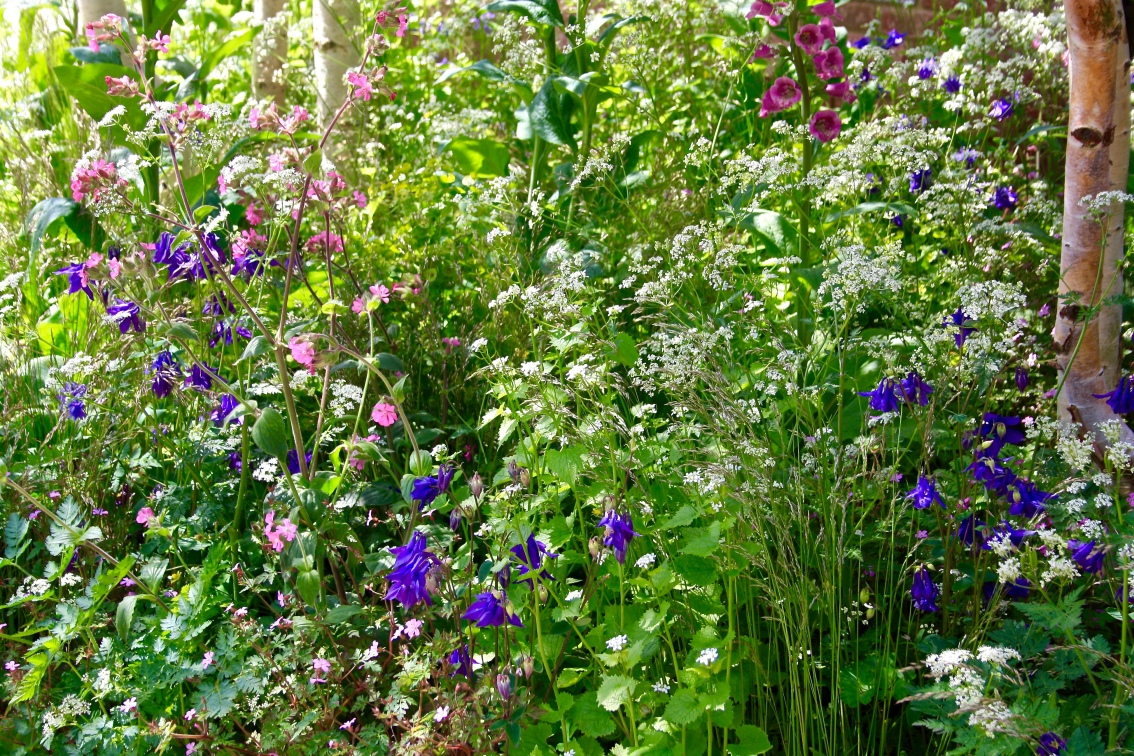 Nature knows best – Could embracing wildflowers improve garden resilience?